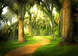 Bok walking path